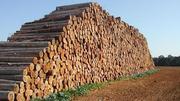 Продаю лес хвойных и других пород (кругляк)